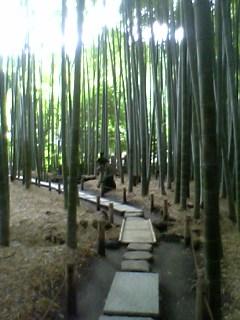 報国寺 [鎌倉]